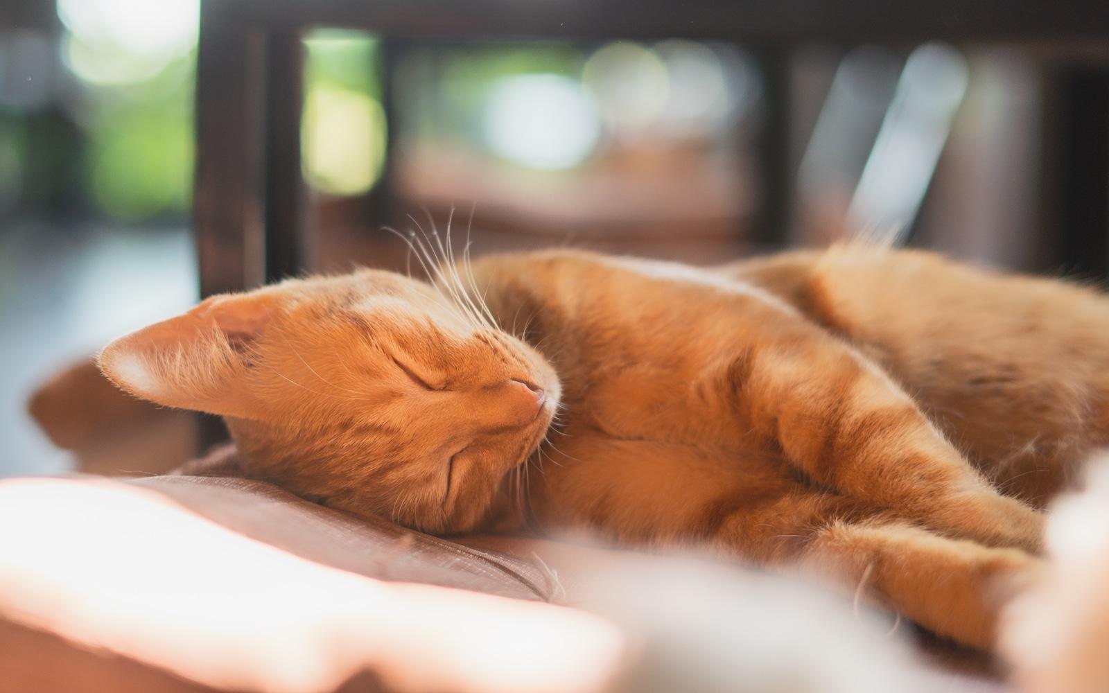 L'autohypnose pour s'endormir, comment ça marche ?